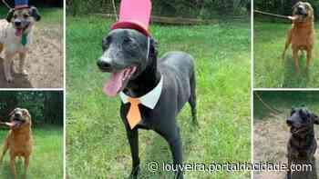 Zoonoses tem cinco cachorros esperando para adoção em Louveira nesta sexta (18) - Portal da cidade