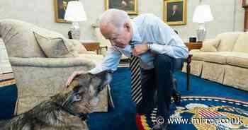 Joe Biden's dog Champ dies as US president pays tribute to beloved pet