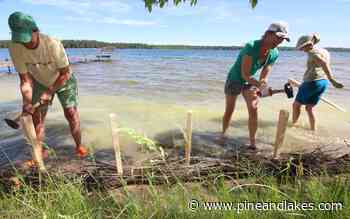 Volunteers undertake shoreline restoration project on Trout Lake on the Whitefish Chain of Lakes - Pine and Lakes Echo Journal