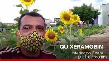 Morador de Quixeramobim planta centenas de girassóis pelas ruas em homenagem à namorada, no Ceará; vídeo - G1
