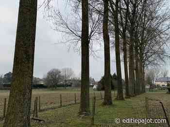 LENNIK - De VZW Bescherm Bomen en Natuur heeft beroep ingediend tegen het kappen van bomen - Editiepajot