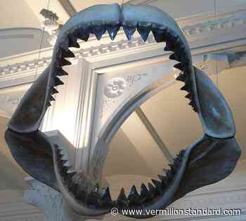 Dino News and Views: The Megalodon Misconceptions - Vermilion Standard