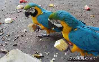 Animais do zoológico de Volta Redonda ganham festa junina   Volta Redonda   O Dia - O Dia