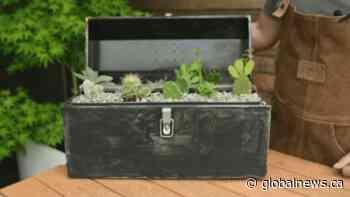 GardenWorks: Father's Day gift ideas
