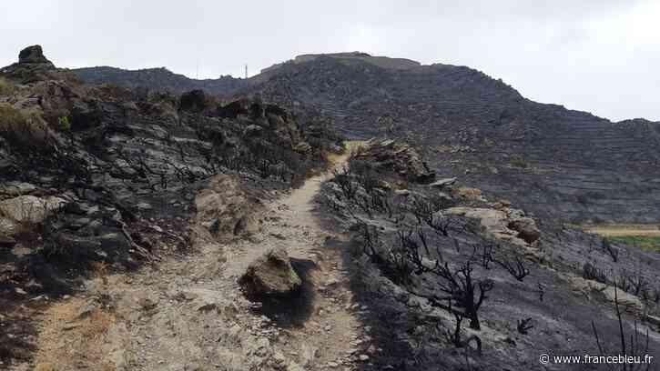 La désolation à Port-Vendres, paysage lunaire après l'incendie qui a détruit 50 hectares - France Bleu