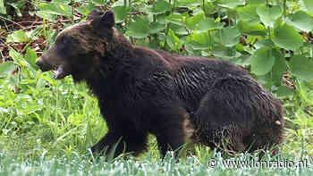 Japanse jagers schoten de beren dodelijk neer na urenlange razernij die 4 . trof - LonRadio