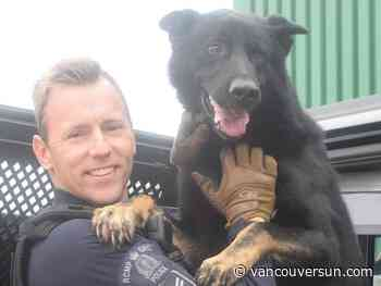 Abbotsford police mourn service dog killed in Alberta shootout