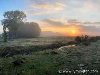 Guided Discovery Walk with Wild New Forest | Meeting Boltons Bench Lyndhurst Hampshire - Lymington.com