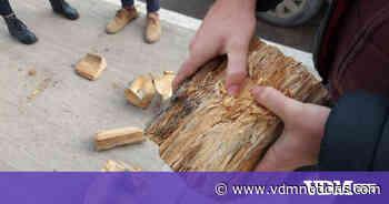 """Explican las razones del corte de dos árboles en Viedma: """"podían causar una tragedia"""" - VDM Noticias"""