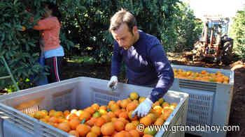 Granada aumenta un 6,4% la exportación agroalimentaria - Granada Hoy