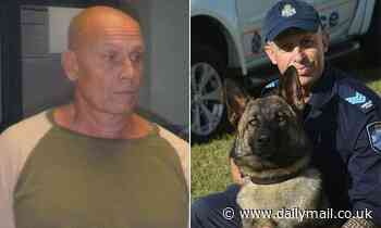 Wanted man on the run from police after beloved police dog Rambo was killed while tracking him