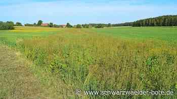 Blühstreifen in Niedereschach - Ein Beitrag zur biologischen Schädlingsbekämpfung - Schwarzwälder Bote