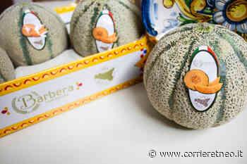 Adrano, i meloni di Barbera imbattibili in tutta Europa: export in oltre 30 Paesi - Corriere Etneo
