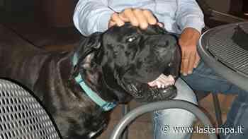 Burt, il cane di Palermo sotto scorta, ha trovato casa grazie a La Zampa - La Stampa
