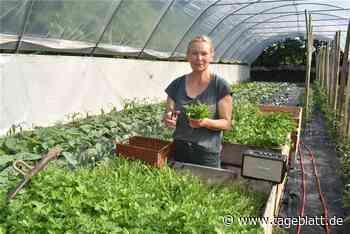 Dieses Jorker Gemüse wird mit Mozart beschallt - Jork - Tageblatt-online