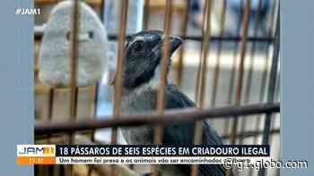 15 pássaros silvestres são resgatados de cativeiro em Manaus - G1