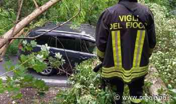 Borgo Ticino: albero cade su auto - La Prealpina