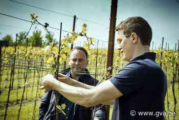 Sommelier Jurgen Lijcops tipt de beste Limburgse wijndomeine... - Gazet van Antwerpen