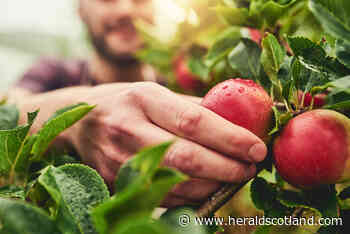 Gardening with Dave Allan: I fear the coldest spring for years has ruined fruit crops - HeraldScotland