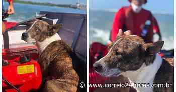 Cachorro cai no mar e é resgatado pelos bombeiros em Porto Seguro - Jornal Correio