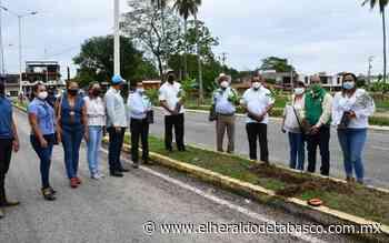 Llevan a cabo acciones de reforestación en Jalpa de Méndez - El Heraldo de Tabasco