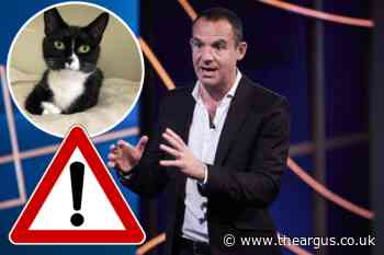 Martin Lewis issues warning to cat owners in the UK