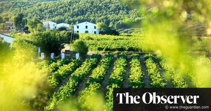 Unexpected wines from well-known producers | David Williams