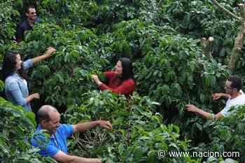 Café de Los Santos gana los tres primeros lugares en concurso para elegir el mejor grano de Costa R - La Nación Costa Rica