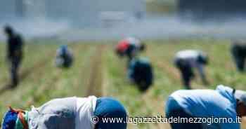 Bari, carabinieri arrestano bracciante agricolo 30enne per minacce al datore di lavoro - La Gazzetta del Mezzogiorno