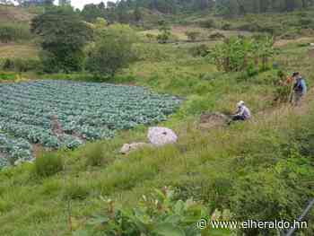 En plantación de hortalizas matan a hombre en San José de Sonaguera - ElHeraldo.hn
