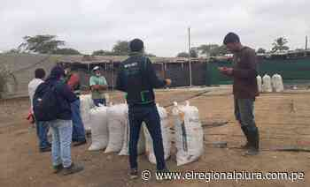 Sullana: intervienen más de 8 toneladas de productos hidrobiológicos - El Regional