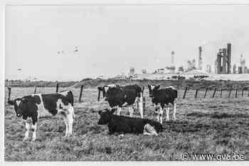 Waarom Zwijndrecht al sinds 1953 vruchtbare grond voor veron... (Zwijndrecht) - Gazet van Antwerpen