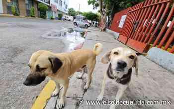 Reforma contra el maltrato animal, un paso adelante - El Sol de Cuautla