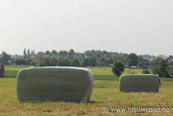 Twee balen hooi gestolen in Zolder - Het Nieuwsblad