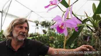 Signore delle Orchidee, dalla fabbrica alla serra: Ivan, è di Treviso il più grande collezionista d'Italia - La Tribuna di Treviso