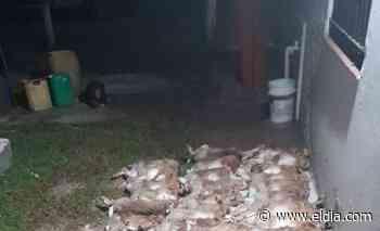 ¡Animales! Caen cazadores furtivos con más de 50 liebres muertos en Brandsen - Diario El Dia