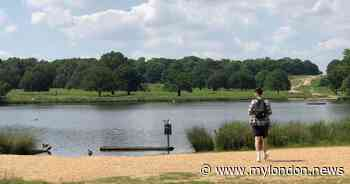 'I went to Richmond Park for the first time and it was the best park in London by some distance' - My London
