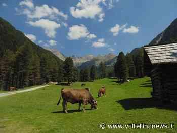 Sondrio, la stagione d'alpeggio parte in ritardo - Valtellina News