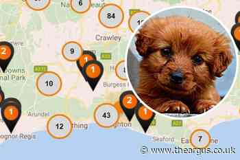 Dogs at risk from lungworm - over 1,300 cases reported near Brighton
