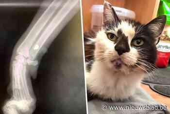 Katje overleeft als bij wonder nadat het doorzeefd wordt met 17 kogels