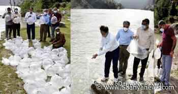 Fisheries Deptt stocks 4 Lakh Carp fish seeds in Dul Hasti Reservoir - 5 Dariya News