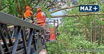 Baum stürzt an B102 bei Bad Belzig in Telefonleitung - Märkische Allgemeine Zeitung