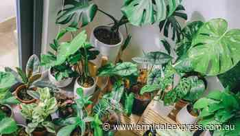 Gardening Matters    Ease off watering indoor plants in winter - Armidale Express