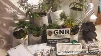 GNR detém dois homens em Santa Maria da Feira por tráfico de droga - Notícias ao Minuto