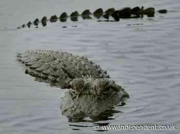 Vacationing children lasso Florida alligator with noose