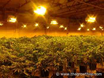 Police bust multi-million-dollar cannabis grow-op in Quinte West, Ont. - The GrowthOp