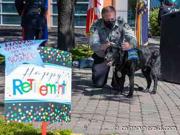 Calgary police's victim support dog Hawk retires after eight-year career - Calgary Herald