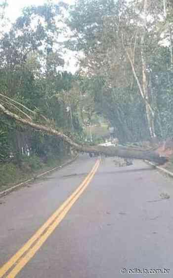 Vento forte derruba árvore e atrapalha o trânsito, em Guapimirim - O Dia