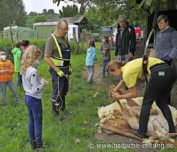Weide statt Klassenzimmer - Kenzingen - Badische Zeitung