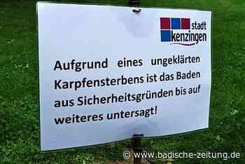 Im Kenzinger Nachtallmendsee darf wieder gebadet werden - Kenzingen - Badische Zeitung